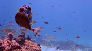 snorkelling-tobago-cays