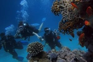 protect reefs