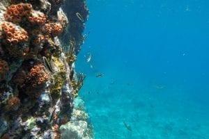 Coral Marine Life